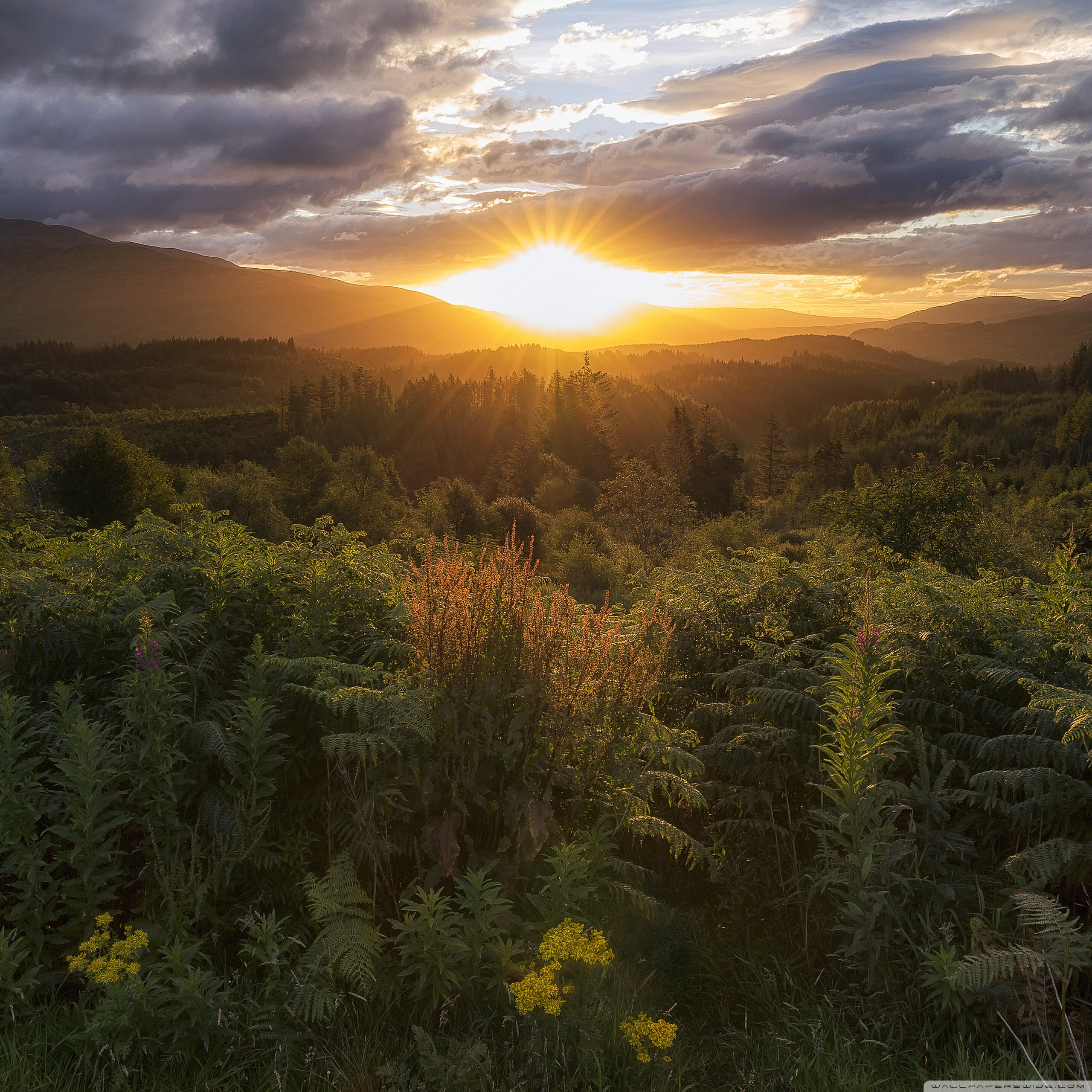 Hd Wallpaper Of Nature: Forest Scotland Nature HD Background Wallpaperscraft