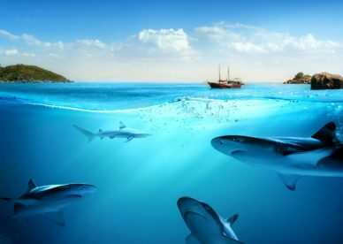 Underwater Wallpapers Ocean Free Images HD Wallpapers Backgrounds Images