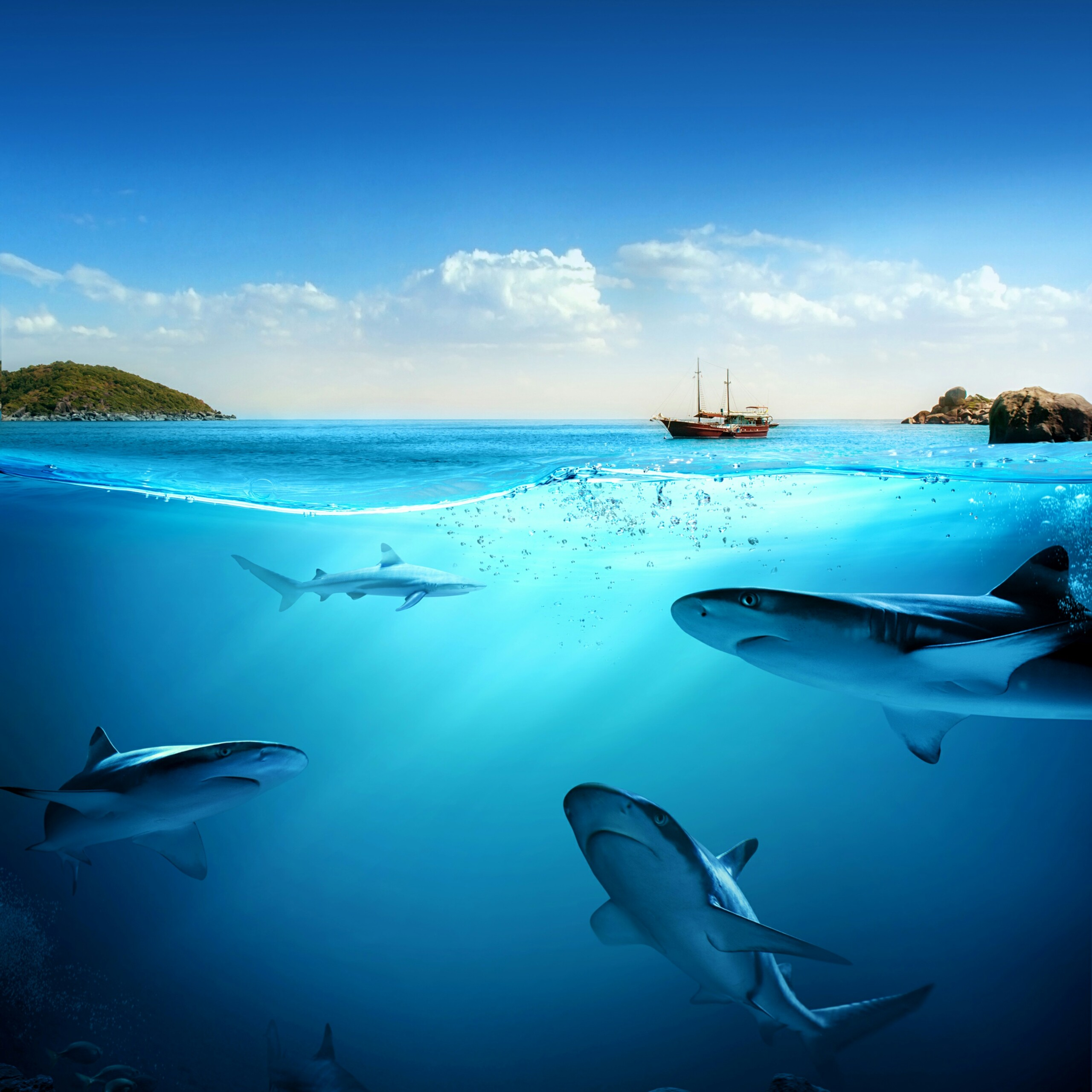 underwater wallpapers ocean free images cool hd