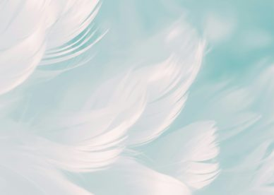 White Feathers Cool Simple Backgrounds Abstract QHD Free Download - HD Wallpapers Backgrounds Images
