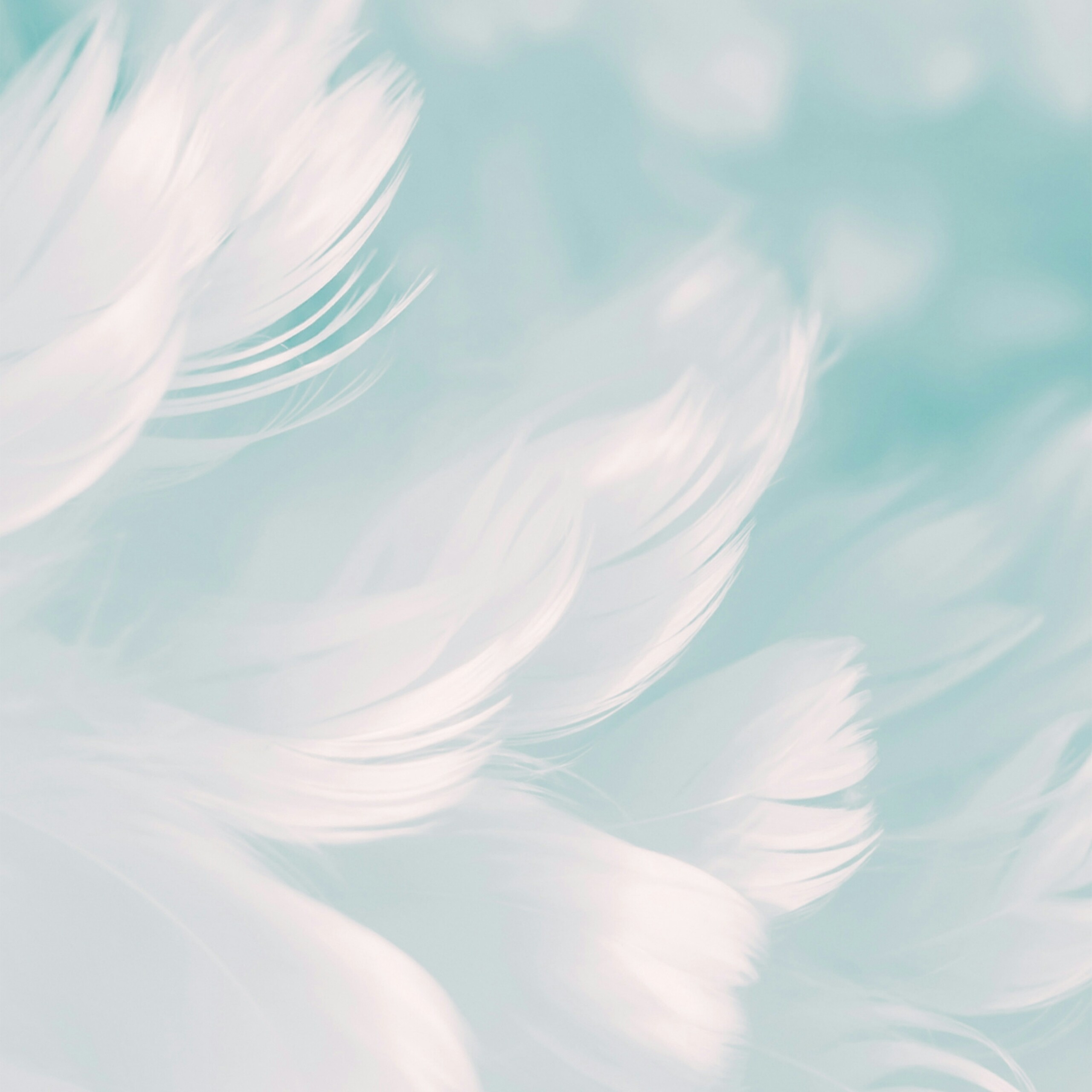 White Feathers Cool Simple Backgrounds Abstract QHD Free